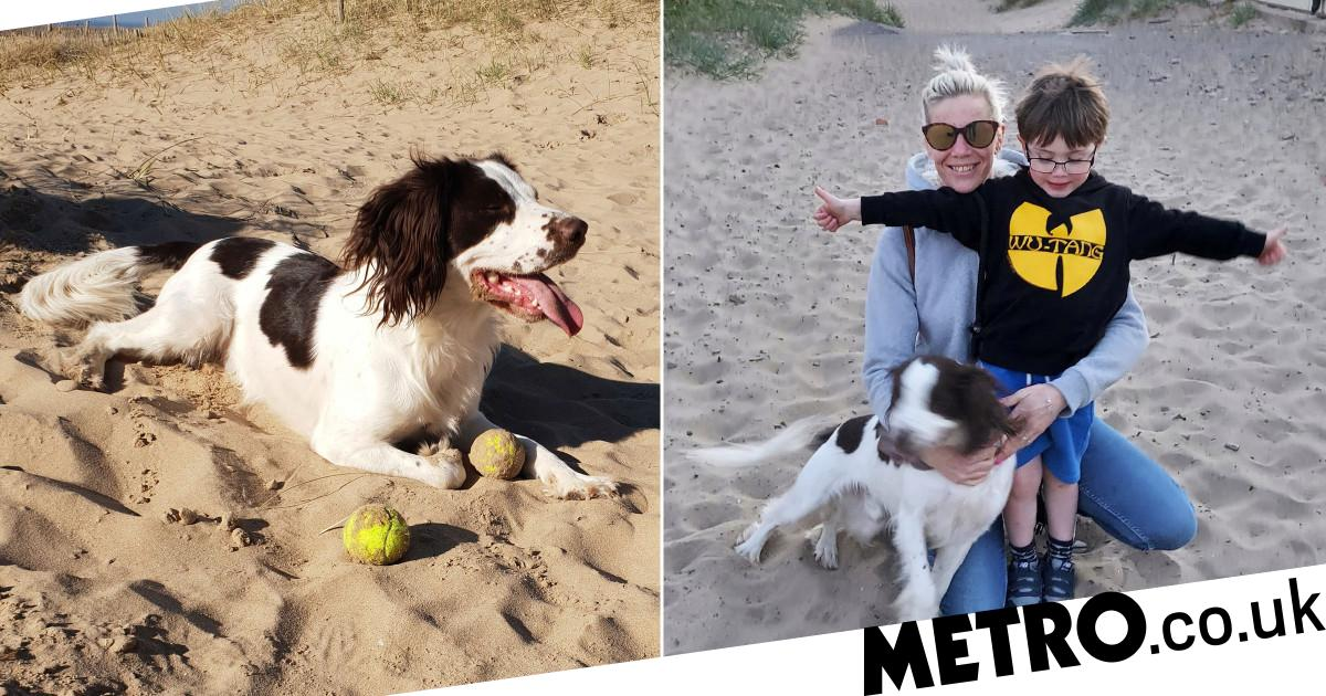 Family dog dies after eating barbecue food littered on beach