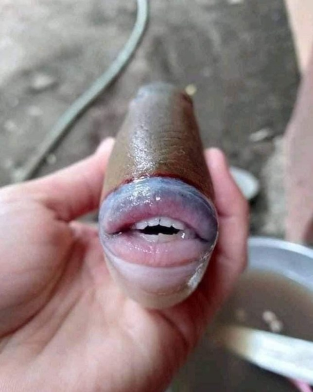 Real or fake? This fish caught in Malaysia apparently has human teeth (Twitter/ @raff_nasir)