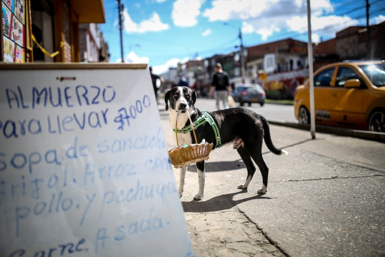 Niño has been picking up food shopping for his owner José Ever Henao, in Bogota, Colombia, during the pandemic.