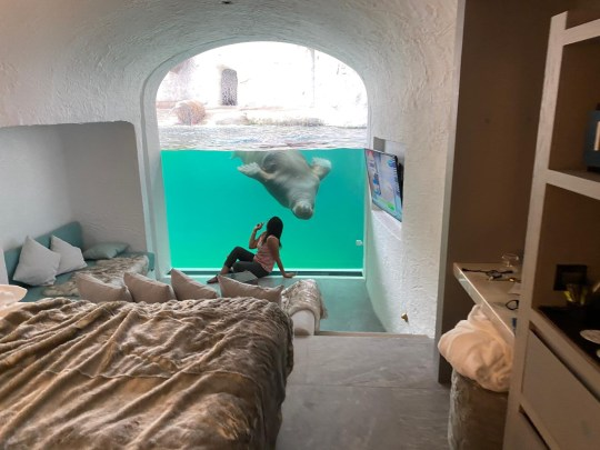 women in hotel room next to walrus