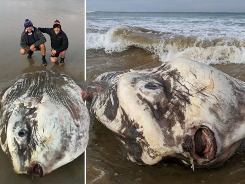Six foot fish that looks like 'an alien' washes up on Australian beach