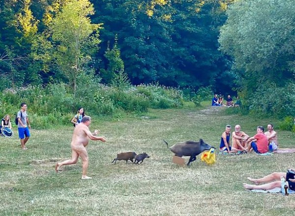 Naked sunbather chases wild boar