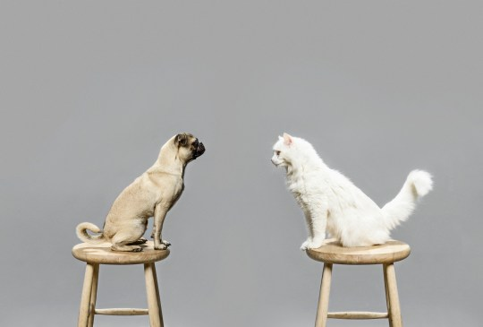 Studio shot of cat and dog looking at each other