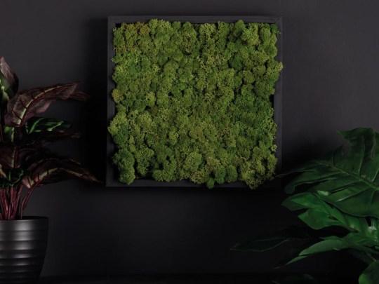 Dowsing & Reynolds' Moss Wall Panel