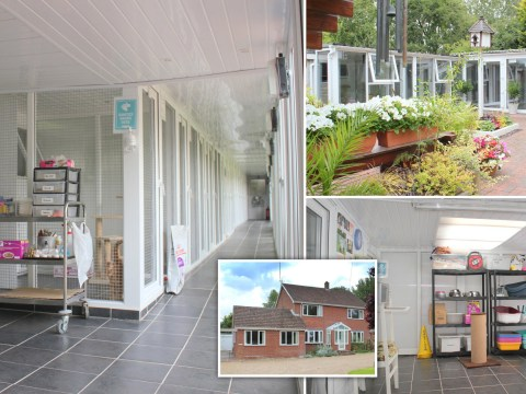 Couple sell four-bedroom home for £850,000 and it comes with a cattery that fits nearly 100 cats