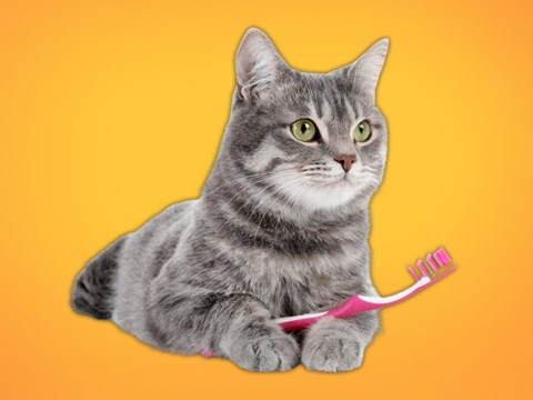 People are brushing their cats with wet toothbrushes because it 'reminds them of being groomed by their mother's tongue'