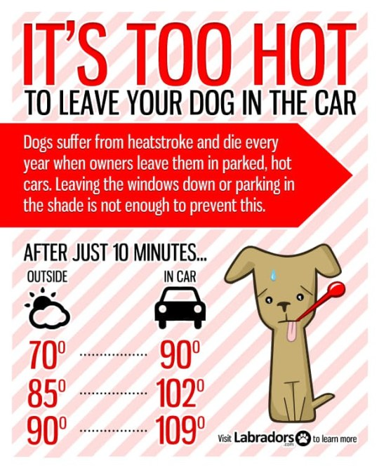 Police share advice about leaving dogs in hot cars.