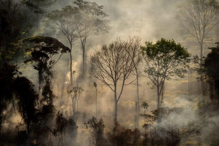 Hotspot directement dans la forêt, à côté d'une zone fraîchement déboisée, avec avertissement Deter, à Alta Floresta, dans l'état du Mato Grosso.