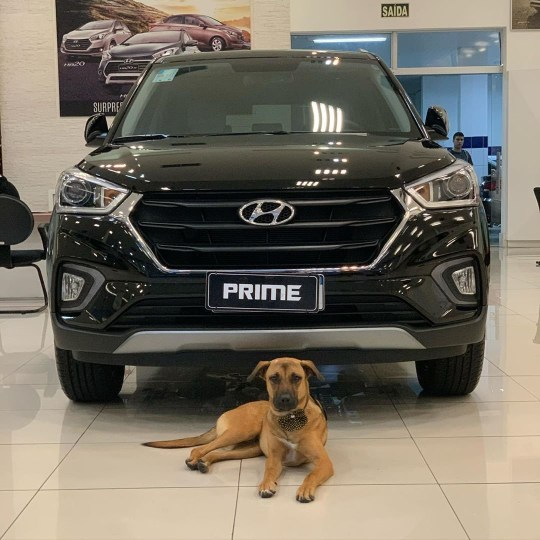Picture: @tucson_prime Stray dog adopted as Brazilian car company mascot