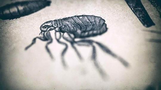 Man in 20s dies of bubonic plague in US   Metro News