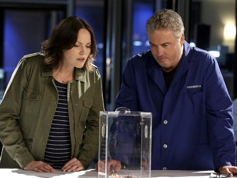 CSI stars William Peterson and Jorja Fox are 'in talks' for 20th anniversary revival series