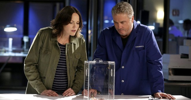 CSI stars William Peterson and Jorja Fox lined up for potential revival series