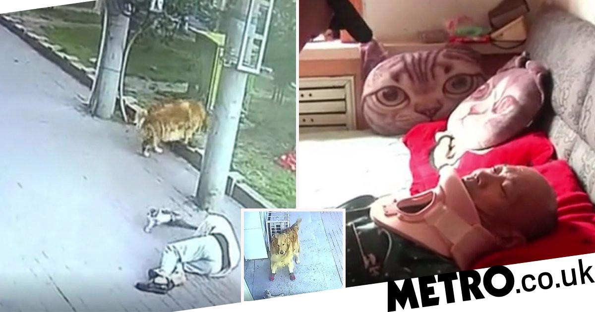 Cat falls from sky, knocks pensioner out then gets in fight with his dog