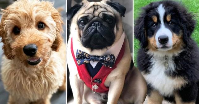 the top three winning dogs