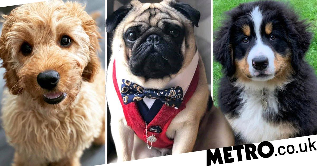 These dogs have been voted the cutest in the UK