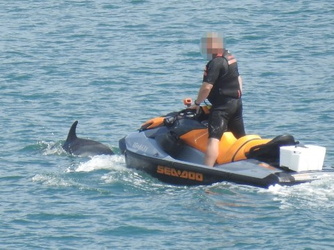 Idiot on jet ski 'harassed pod of dolphins' before riding off