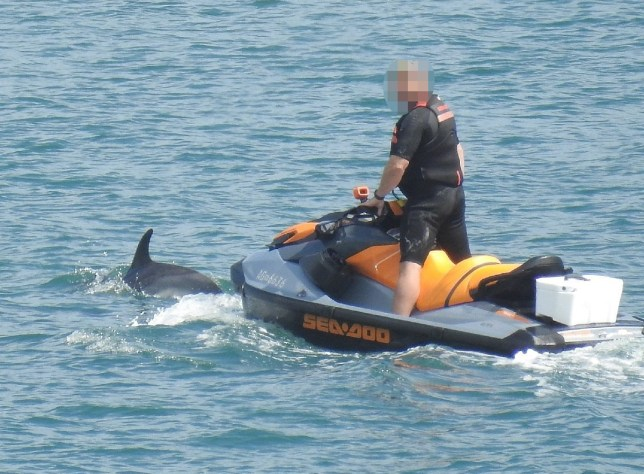 Police have slammed a jet ski rider for 'harassing' dolphins in the sea off Torbay. Paignton Police say the unidentified man allegedly pestered the wild creatures for over 45 minutes before finally leaving them alone. They have reminded the public it is an offence to disturb wild animals and say such actions will not be tolerated.