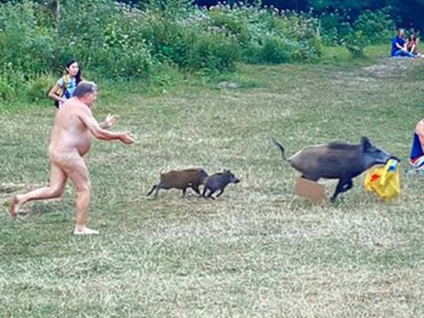 Naked granddad chases wild boar after it ran off with his belongings