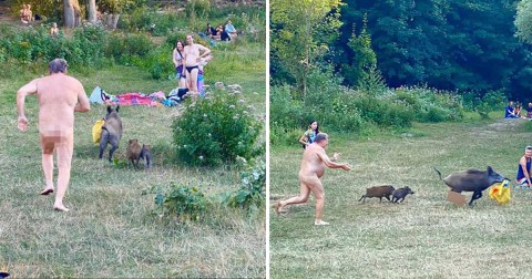 Naked sunbather chases after wild boar that stole his laptop bag | Metro  News
