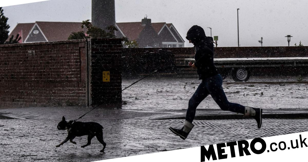 New law could order Germans to walk their dogs twice a day