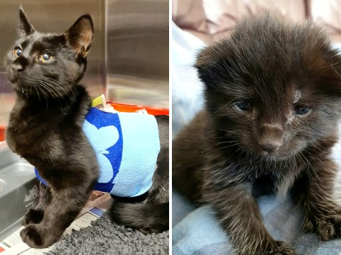 Severely deformed abandoned kitten makes miracle recovery after risky operation