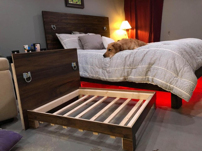 The bed, with the pet lying on top of it, and the dog bed replica.