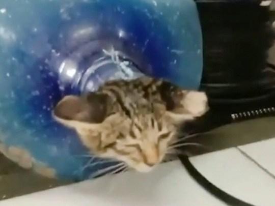 Un chaton errant a dû être sauvé après avoir été retrouvé coincé dans un distributeur d'eau de bureau abandonné.