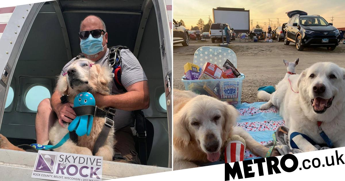 Golden Retriever with terminal cancer ticks off his bucket list