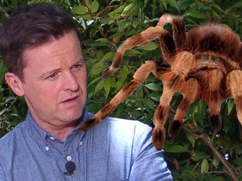 Declan Donnelly rushed to medics for spider bite in the middle of the night during I'm A Celebrity filming