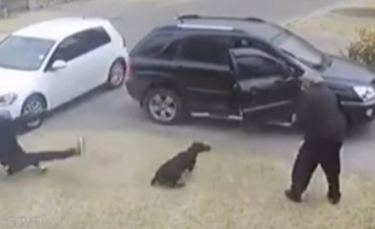Moment Niki the Doberman takes bullet to save owner's life during armed robbery in Brakpan, South Africa