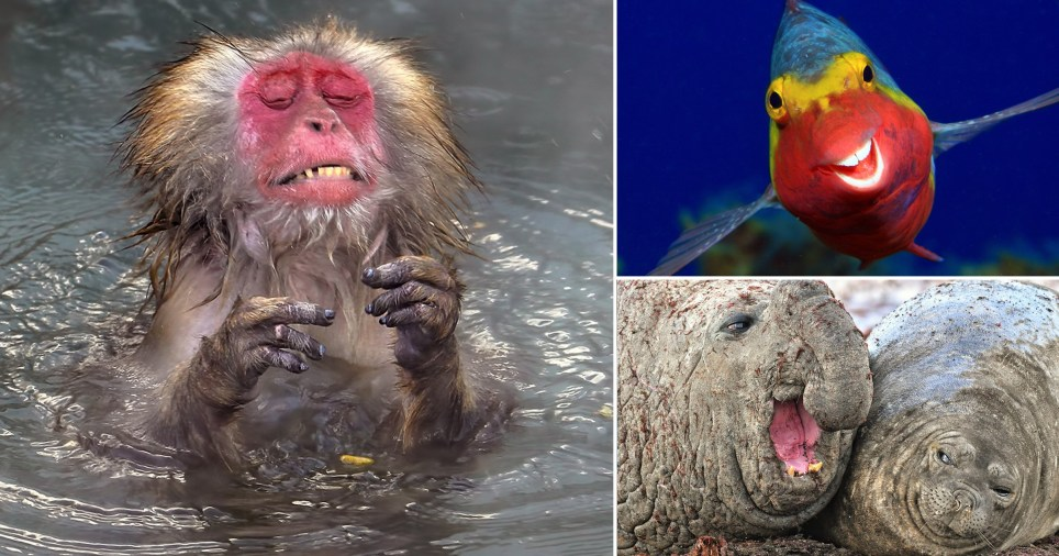 A baboon, smiling fish and a walrus that appears to be crying can be seen.