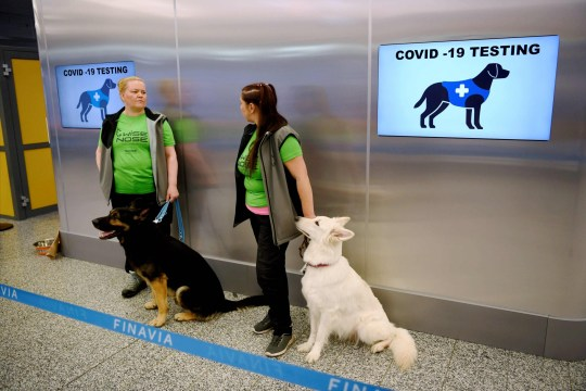 The coronavirus sniffer dogs Valo (L) and E.T. sit near their trainers at the Helsinki airport in Vantaa, Finland, to detect the Covid-19 from the arriving passengers, on September 22, 2020. (Photo by Antti Aimo-Koivisto / Lehtikuva / AFP) / Finland OUT (Photo by ANTTI AIMO-KOIVISTO/Lehtikuva/AFP via Getty Images)