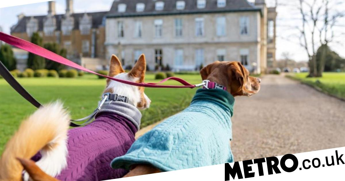 The UK's best dog-friendly hotels and holiday homes