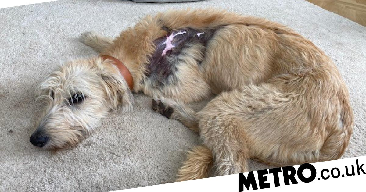 Abandoned and mistreated puppy with skin burns finds her forever home