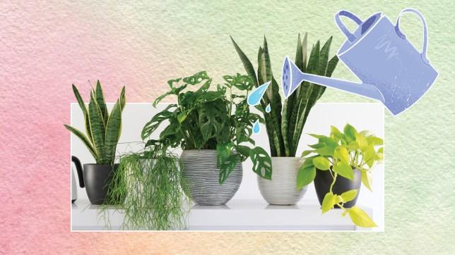 Plants comp