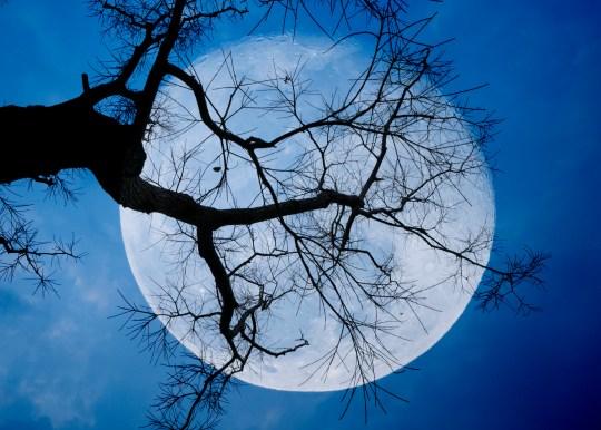 A 'blue moon'