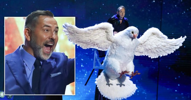 Caption: Exclusive - BGT magician scares David Walliams with big bird during semi-final Picture: Rex