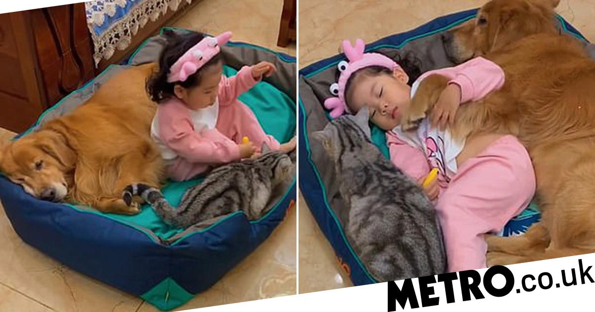 Little girl has the cutest nap with pet dog and cat