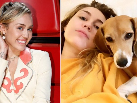 Miley Cyrus' dog was electrocuted on the set of The Voice