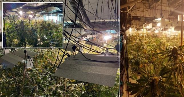 Three-floor cannabis farm worth £1,000,000 found in former Nightclub