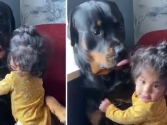 Baby girl cuddles up to giant Rottweiler in viral Instagram post