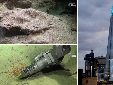 Great Barrier Reef: Scientists find new coral taller than the Shard