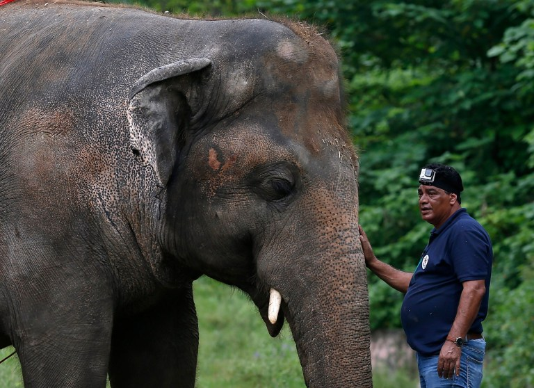 Photograph of a vet touching the elephant's trunk