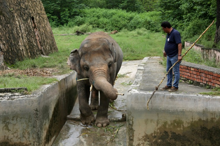 Photograph of the vet guiding the elephant