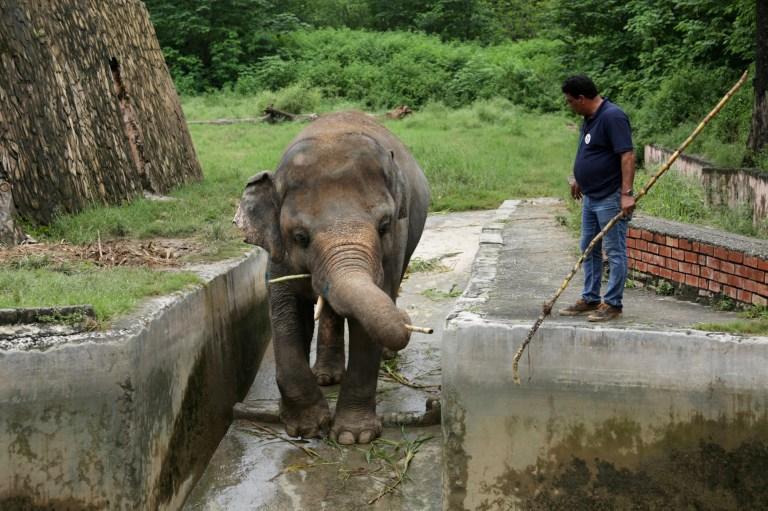 Photographie du vétérinaire guidant l'éléphant