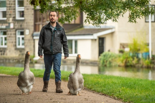 Sven Kirby, 34, takes his pet geese Beep Beep and Norbert (21wks) along the canal to the pub in Leeds, West Yorks., October 05 2020. See SWNS story SWLEgeese; An animal obsessed singleton has purchased two pet geese - which he puts in nappies and takes to the pub. Eccentric Sven Kirby, 34, has hand reared the birds from five days old after buying them for ??40 each in June. He is often seen walking the streets, parks and canals of Leeds, West Yorks., with Beep Beep and Norbert waddling along behind. When admin assistant Sven is at home the pair have free reign of the house, while at night time and on weekdays they are confined to a pen in the garden. Incredible pictures and videos show Norbert and Beep Beep walking down the street, sleeping on Sven's chest, wearing their nappies and relaxing at the pub.