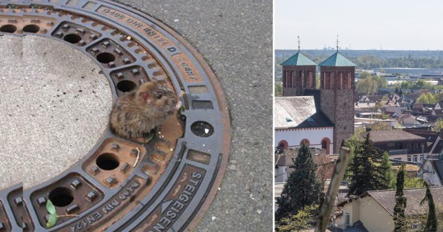 Composition showing rat stuck in the drain and German city
