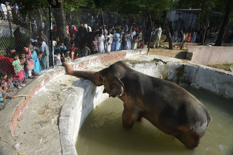 Photograph of an elephant in a pool of water while surrounded by people