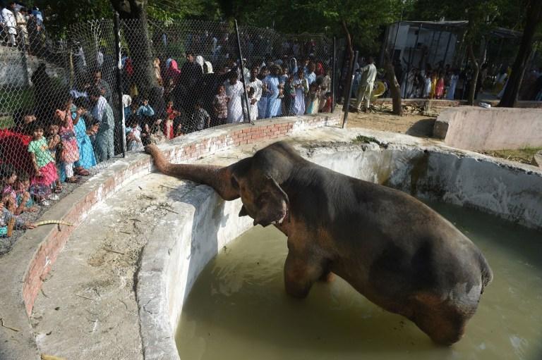 Photographie d'un éléphant dans une piscine d'eau entouré de gens