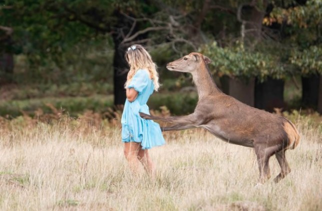 Singer kicked by deer as she posed for pictures in Richmond Park (Picture: @MPSRoyal_Parks/Twitter)